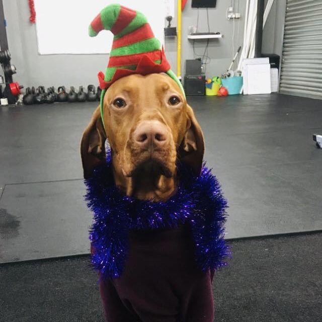 Christmas leo