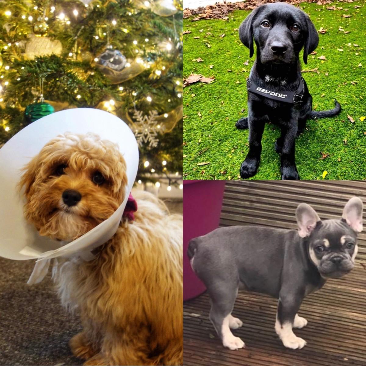 Pup Corner Dec 2020
